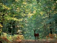 Forêt de Dreux