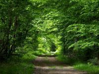 Proximité de Luray (28) : La forêt de Dreux