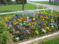 Luray - Massif de fleurs